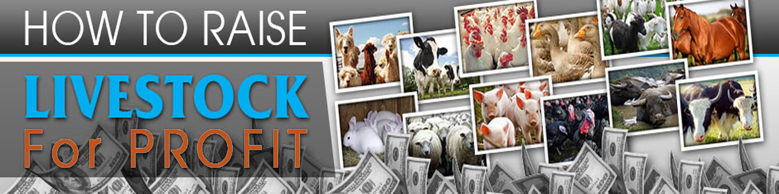 How To Raise Livestock For Profit