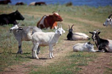 Most Profitable Small Animals To Raise