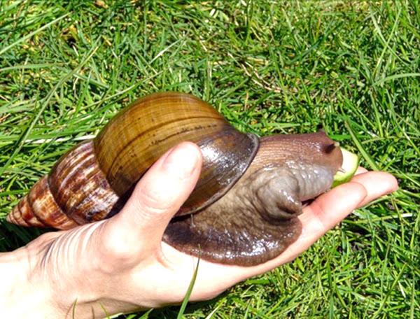 Advantages And Disadvantages Of Snail Farming