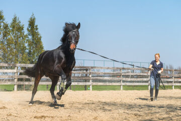 Beginner Horse Training Basics And Fundamentals