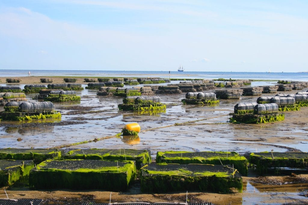 Books About Oyster Farming