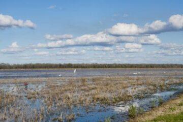 Crawfish Pond Management