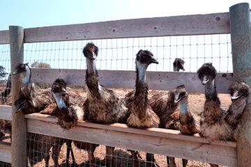 Emu Facilities Management