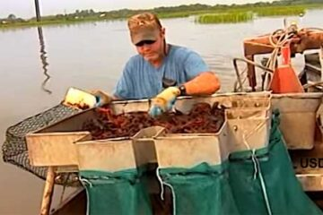 How Much Do Crawfish Farmers Make