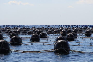 How To Set Up A Mussel Farm
