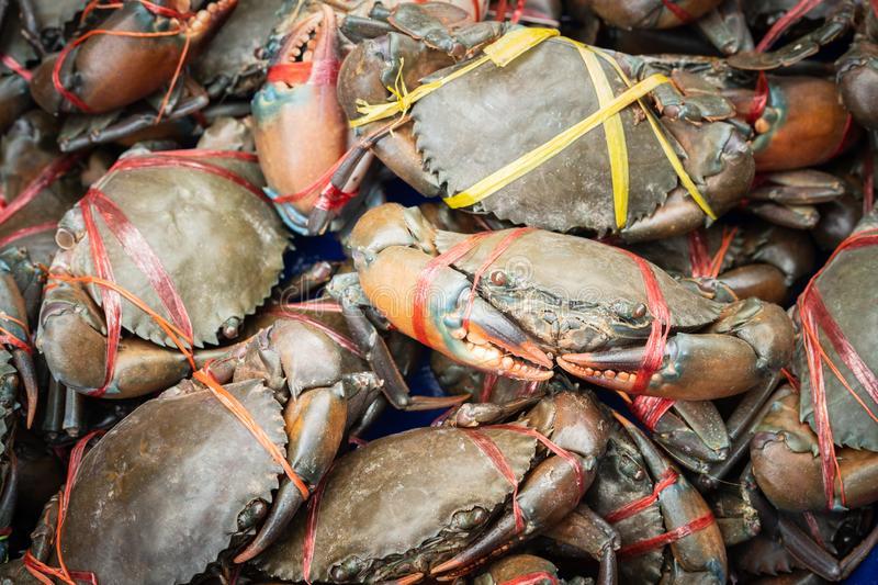 Keeping Mud Crab Broodstock Healthy