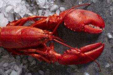 Live Lobster Transportation System