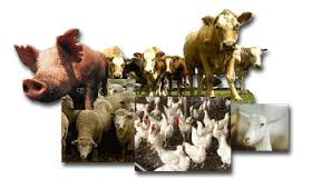 How To Make Money With Farm Animals