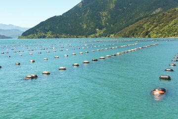 Mussel Farming Environmental Impact