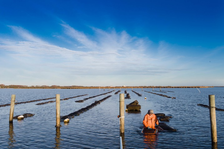 Oyster Aquaculture in the United States