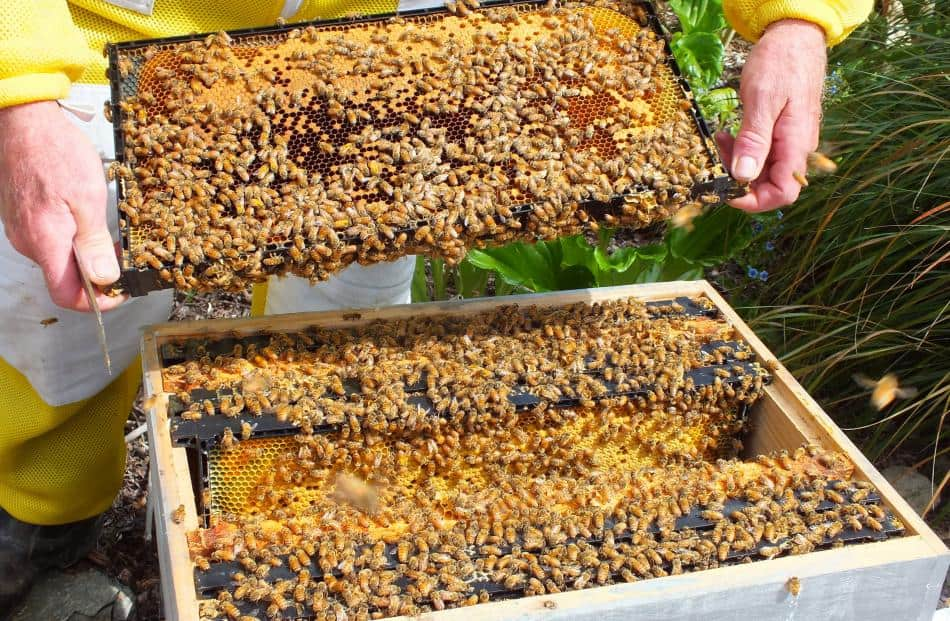 Setting Up An Apiary Rearing Equipment