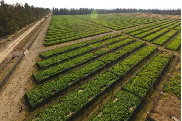 site selection for snail farming