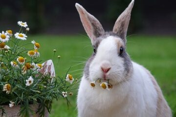 Start Today In Raising Your Own Healthy Rabbits