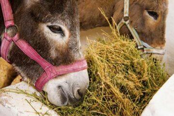 What Do Donkeys Eat?