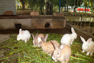 What Is The Best Housing For Rabbits