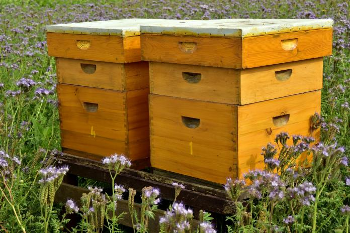 Where To Place Beehives In My Yard